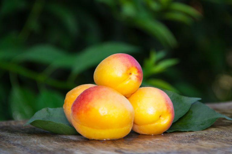 Frutos rojos y albaricoque: las frutas para el verano