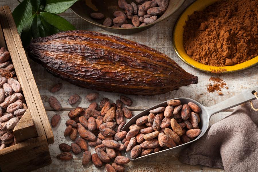 🍫 Beneficios y propiedades del cacao 🍫 | Germinal Bio